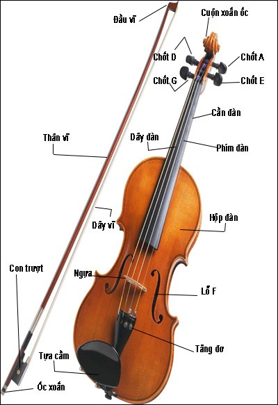 Cấu tạo của đàn Violin gồm những gì?