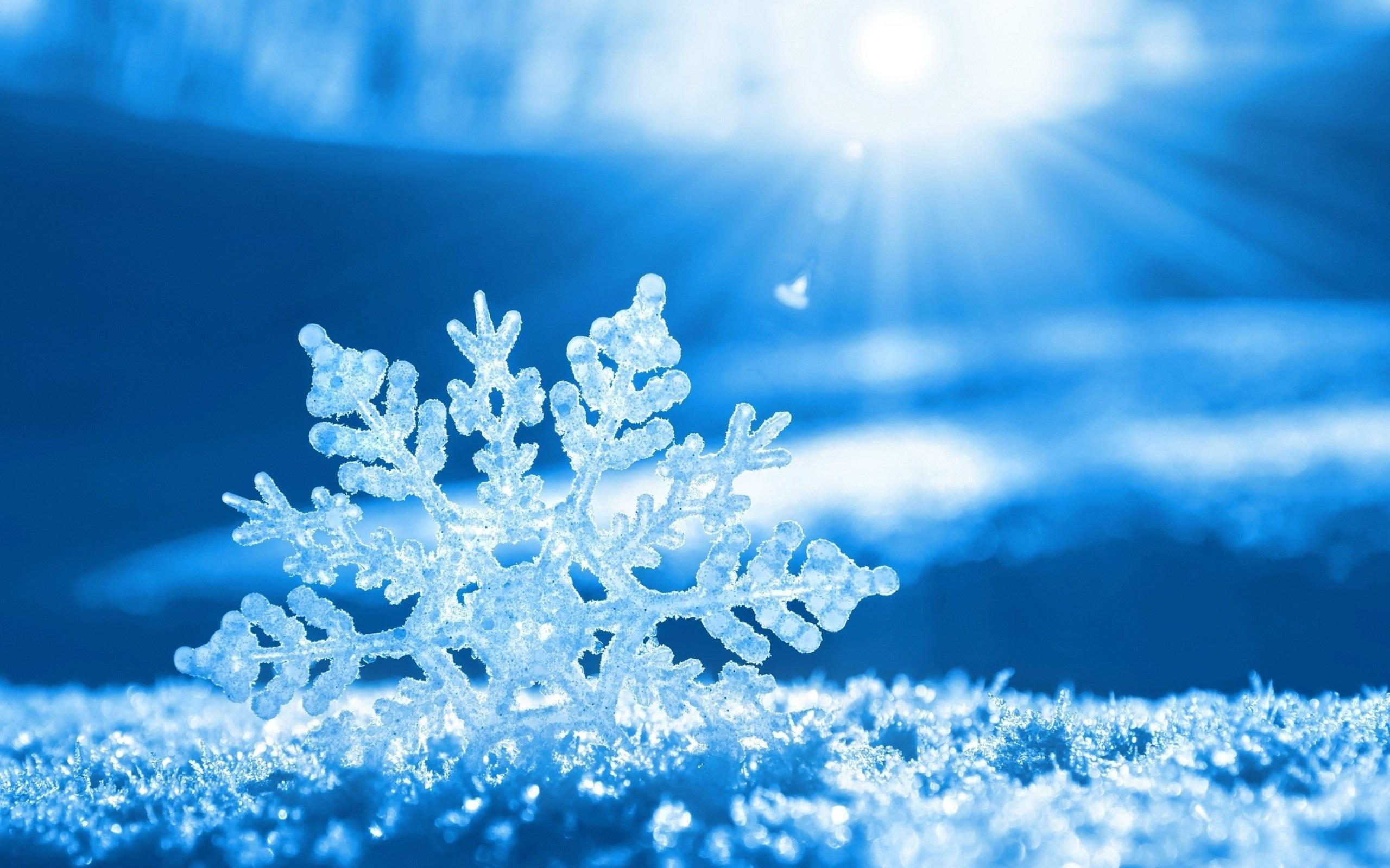 hợp âm bài mùa hoa tuyết